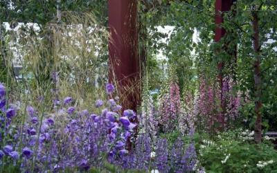 Jane McCorkell Rain Garden 2010 campanulas 2