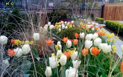 tulips and grasses small
