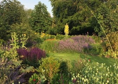 Jane's garden in July