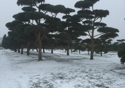 beautiful pines