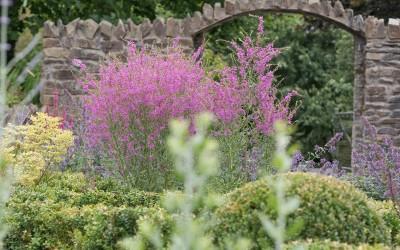 Kildare-Garden-4