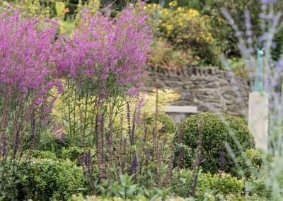 Kildare-Garden-5