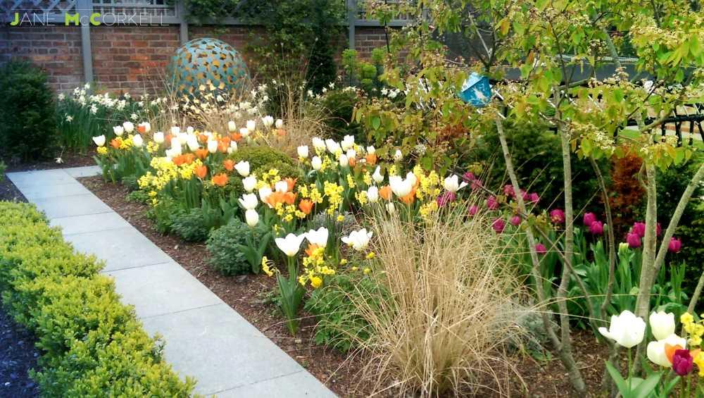 globe tulipssmall
