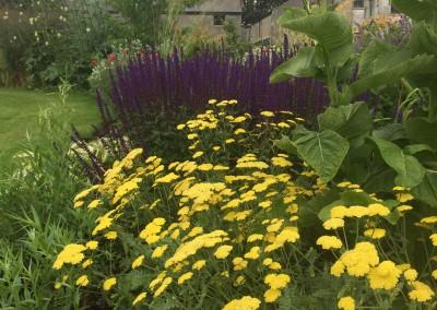 Jane's Garden July