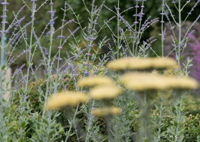 Kildare-Garden-6